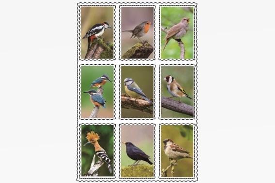Ptaki Naklejki 3d