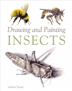 Zdjęcie Drawing and Painting Insects