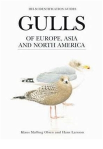 Zdjęcie Gulls of Europe, Asia and North America