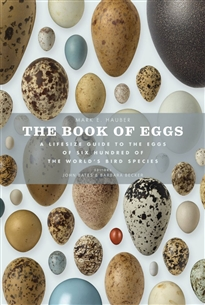 Zdjęcie The Book of Eggs