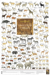 Zdjęcie Ungulates of Africa - Poster: The Grazers and Browsers