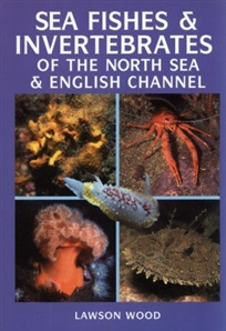 Zdjęcie Sea Fishes and Invertebrates of the North Sea and ...