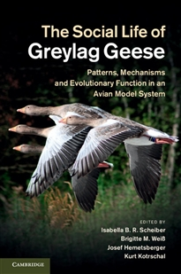 Zdjęcie The Social Life of Greylag Geese