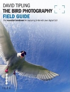 Zdjęcie The Bird Photography Field Guide