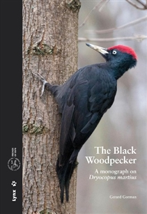 Zdjęcie The Black Woodpecker