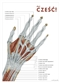 Daj cześć - plakat anatomiczny