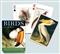 Ptaki - karty