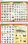 Motyle, owady szkodniki, owady - podkładka edukacyjna
