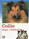 Collie długo- i krótkowłose