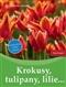 Krokusy, tulipany, lilie…