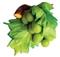 Winogrono zielone - magnes