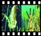 Ekosystem stawu - społeczność roślin