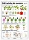 Od kwiatu do owocu II - plansza dydaktyczna