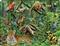 Wilgotny las Amazonki - puzzle