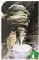 Puchacz - widokówka