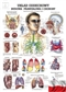 Układ oddechowy człowieka - plakat ścienny