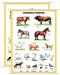 Zwierzęta domowe - plansza dydaktyczna