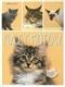 Rasy kotów