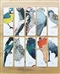 Ptaki - dwustronne zakładki z rysunkami