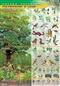 Piętrowość w lesie - plansza dydaktyczna