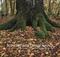 Podkarpacie lasem rośnie