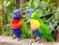 Papugi - magnes 3D
