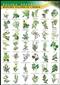 Rośliny lecznicze i zioła - plansza dydaktyczna