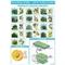 Pospolite drzewa liściaste przekrój liście i owoce