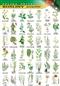 Rośliny pospolite - plansza dydaktyczna