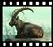 Ekosystem łąk alpejskich - zwierzęta
