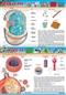 Bakterie i wirusy - plansza dydaktyczna