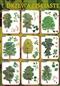 Drzewa liściaste - plansza dydaktyczna