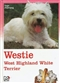 Westie: West Highland White Terrier