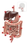 Mata anatomiczna - wędrówka przez układ pokarmowy