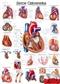 Serce człowieka - plakat ścienny