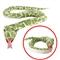 Wąż zielony - pluszak 142 cm