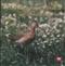 Ptasi Raj - CD