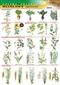 Rośliny uprawne - plansza dydaktyczna