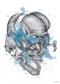 Czaszka - plakat anatomiczny