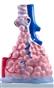 Budowa płuc (pęcherzyki płuc) - struktura wewnętrzna