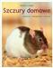 Szczury domowe