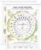Czas i rytmy przyrody - plansza dydaktyczna