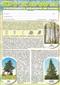 Drzewa. Poznajemy drzewa w lesie