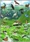 Ekosystemy. Atlas foliogramów