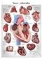 Serce człowieka - plansza