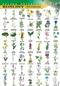 Rośliny chronione - plansza dydaktyczana