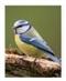 Modraszka - mini notatnik 3D