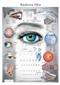 Budowa oka - plansza