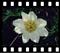 Ekosystem łąk alpejskich - rośliny