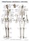 Szkielet człowieka - plansza